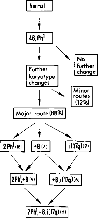 figure XVIII