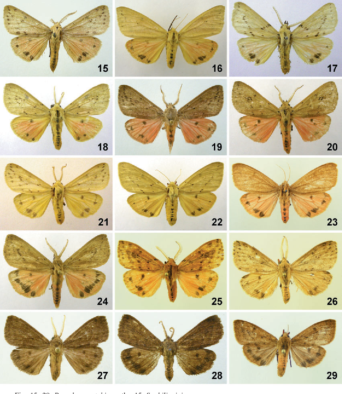 figure 15-29
