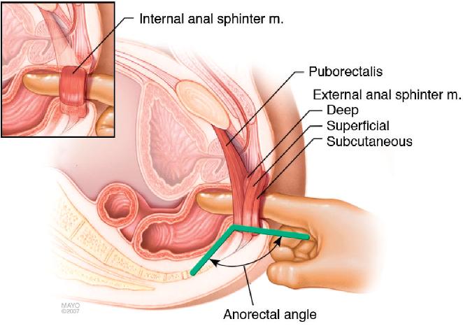 in clitoris Lidocaine