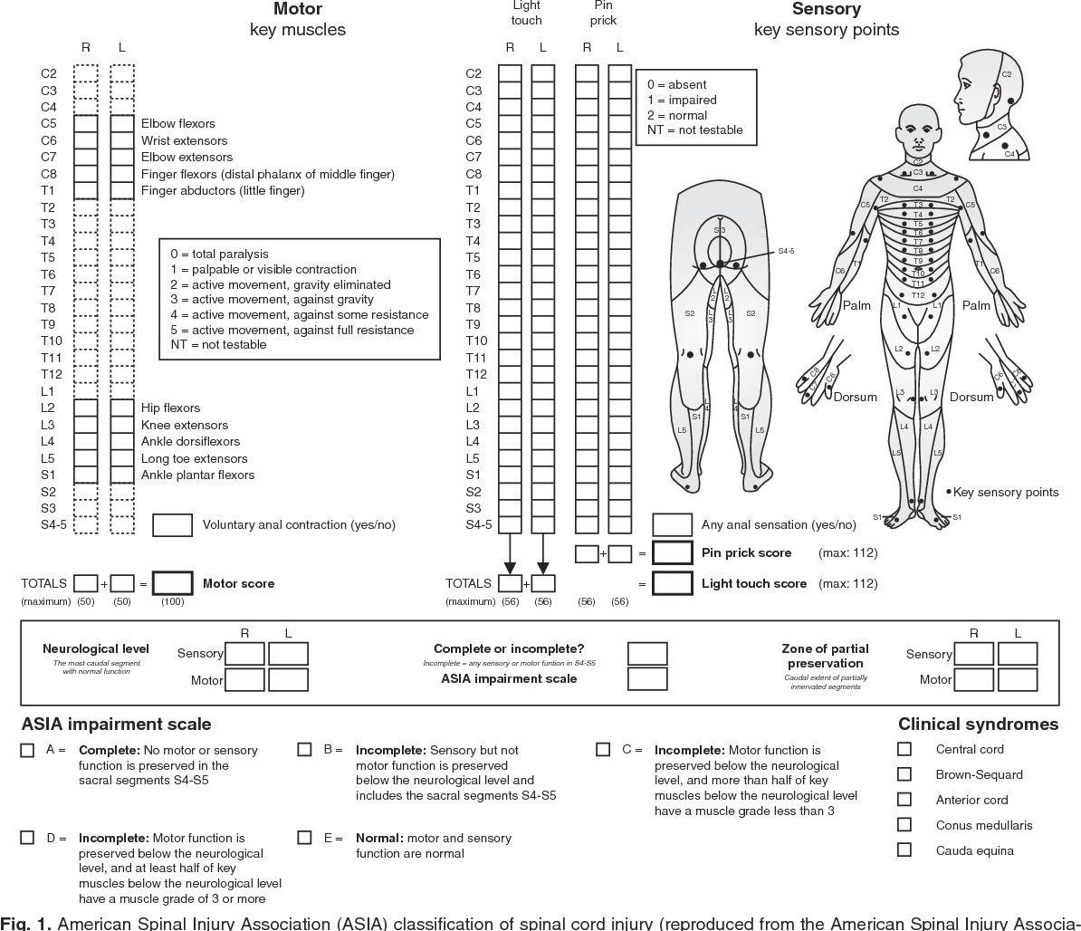 Exercise Recommendations for Individuals with Spinal Cord