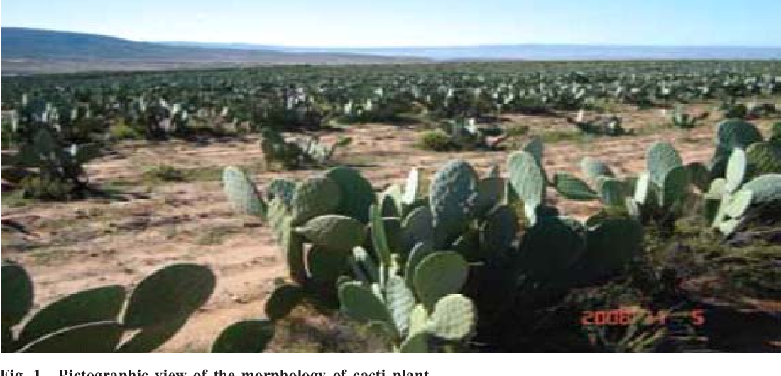 Overview of Cactus (Opuntia Ficus-Indica (L): A Myriad of