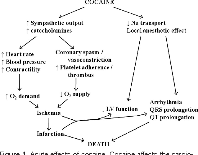 Figure 1 from Cardiovascular effects of cocaine  - Semantic