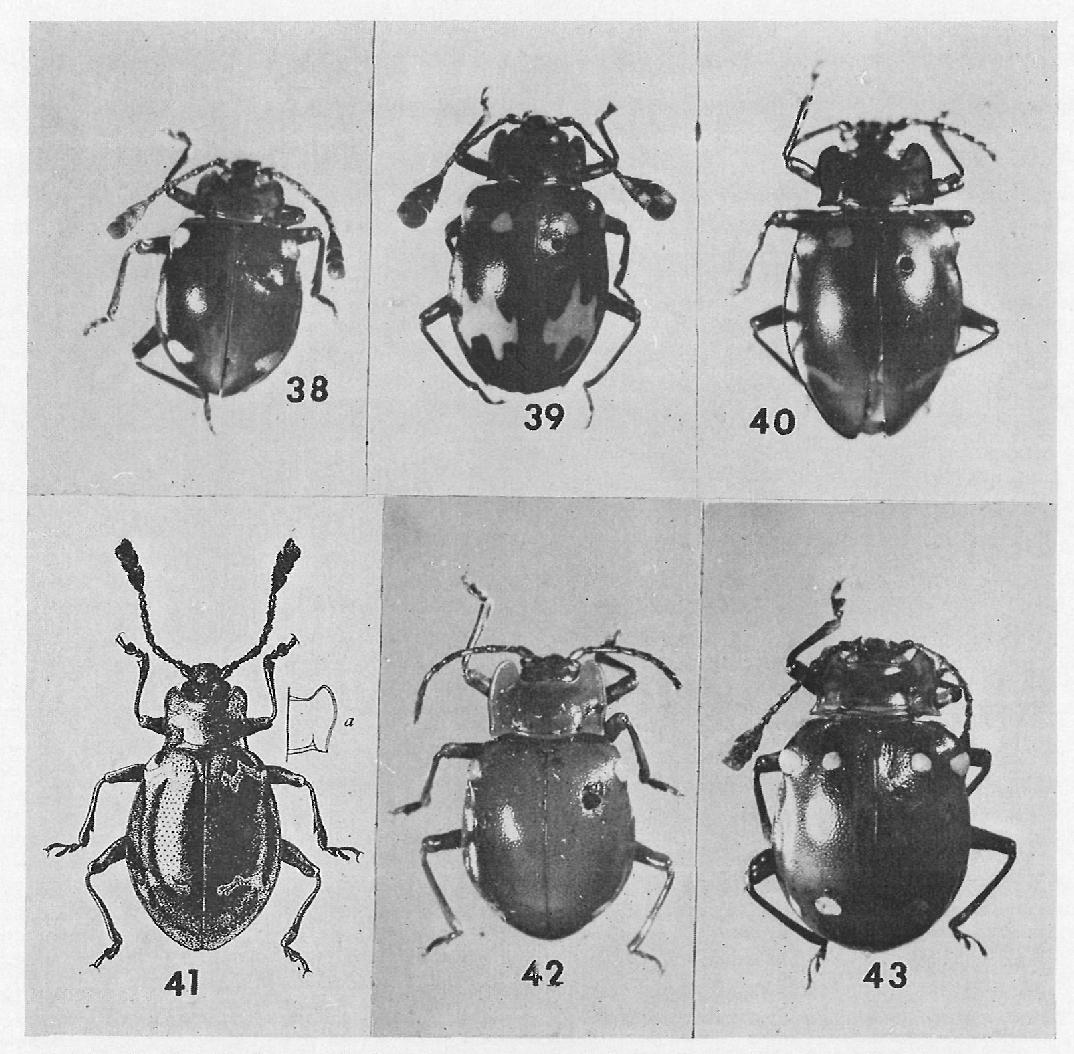 figure 38-43