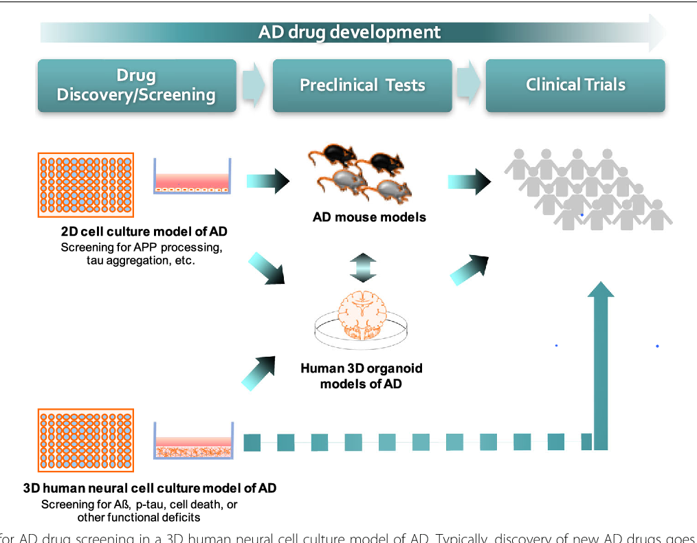 3D culture models of Alzheimer's disease: a road map to a