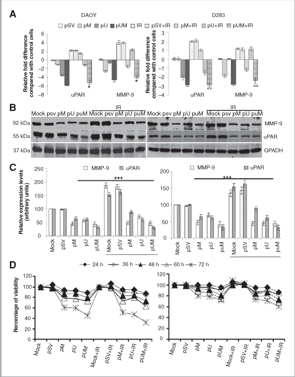 Figure 1 from siRNA-mediated downregulation of MMP-9 and