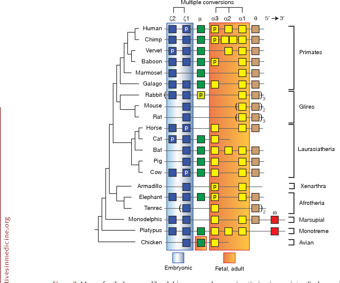 Figure 5 from Evolution of hemoglobin and its genes
