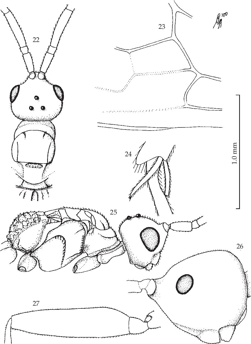 figure 22-25
