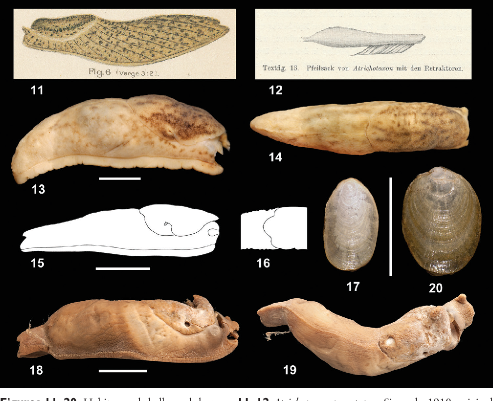 figure 11–20