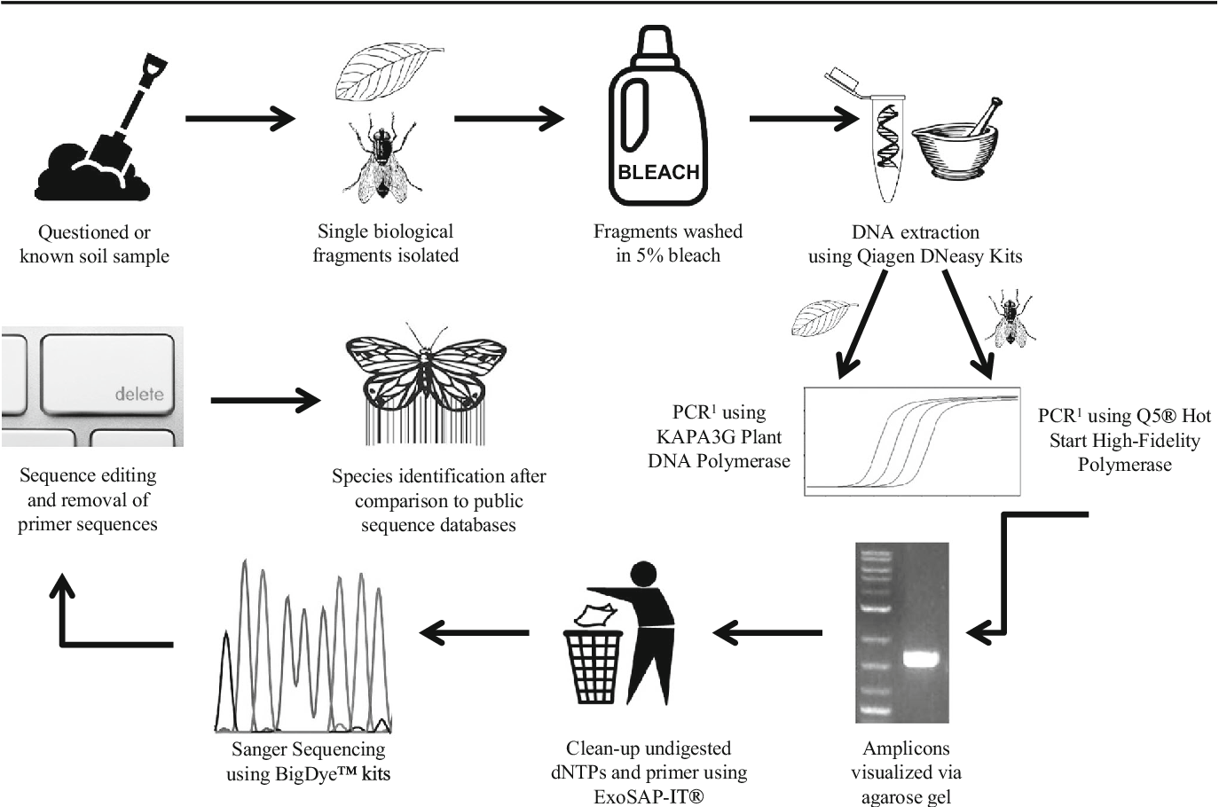 Figure 4 From A Protocol For Obtaining Dna Barcodes From Plant And Insect Fragments Isolated From Forensic Type Soils Semantic Scholar