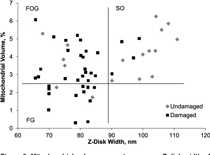 Preferential type II muscle fiber damage from plyometric