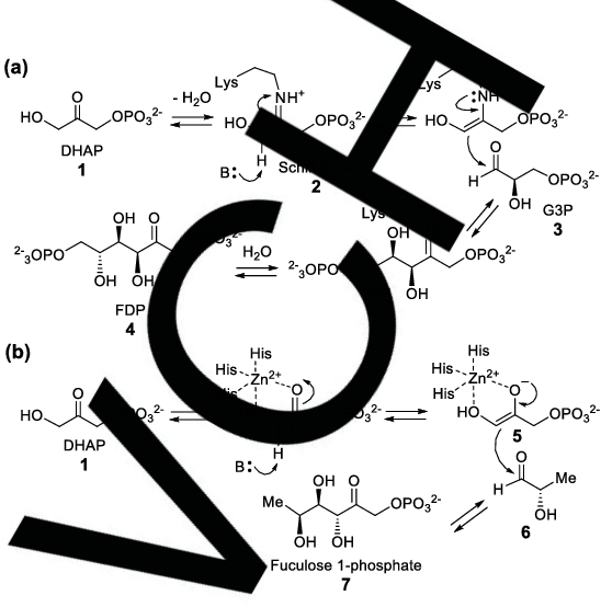 Figure 2 from The Enzymology of Organic Transformations: A