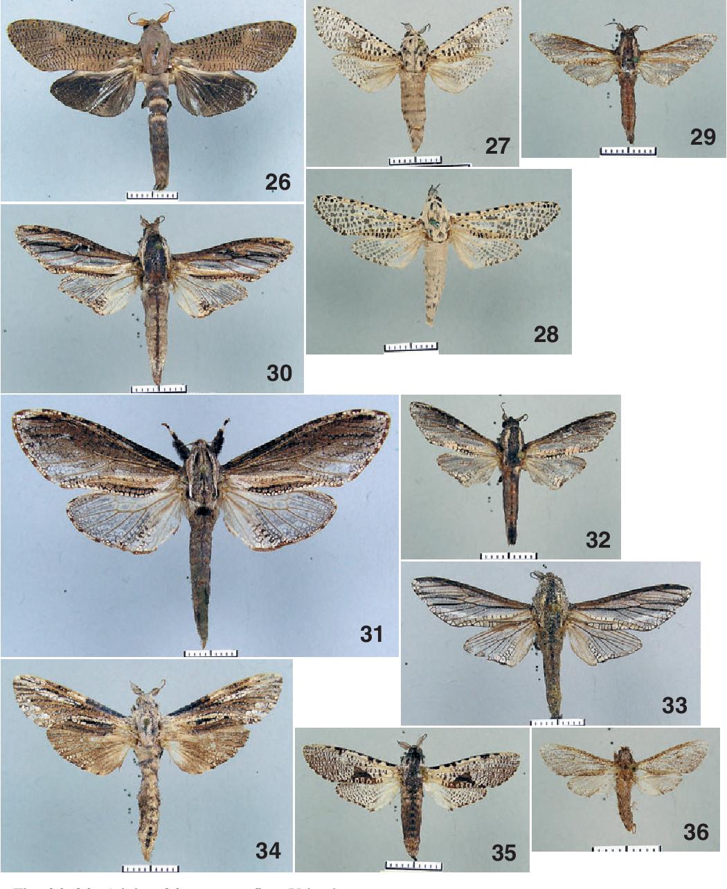 figure 26-36