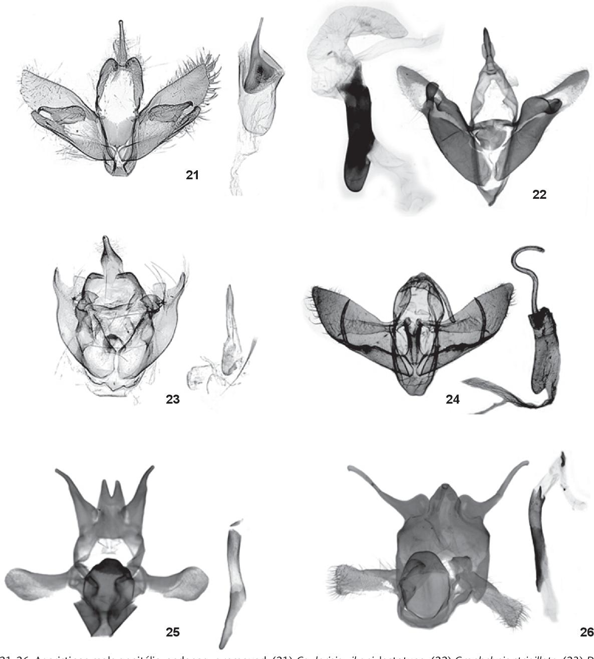 figure 21-26