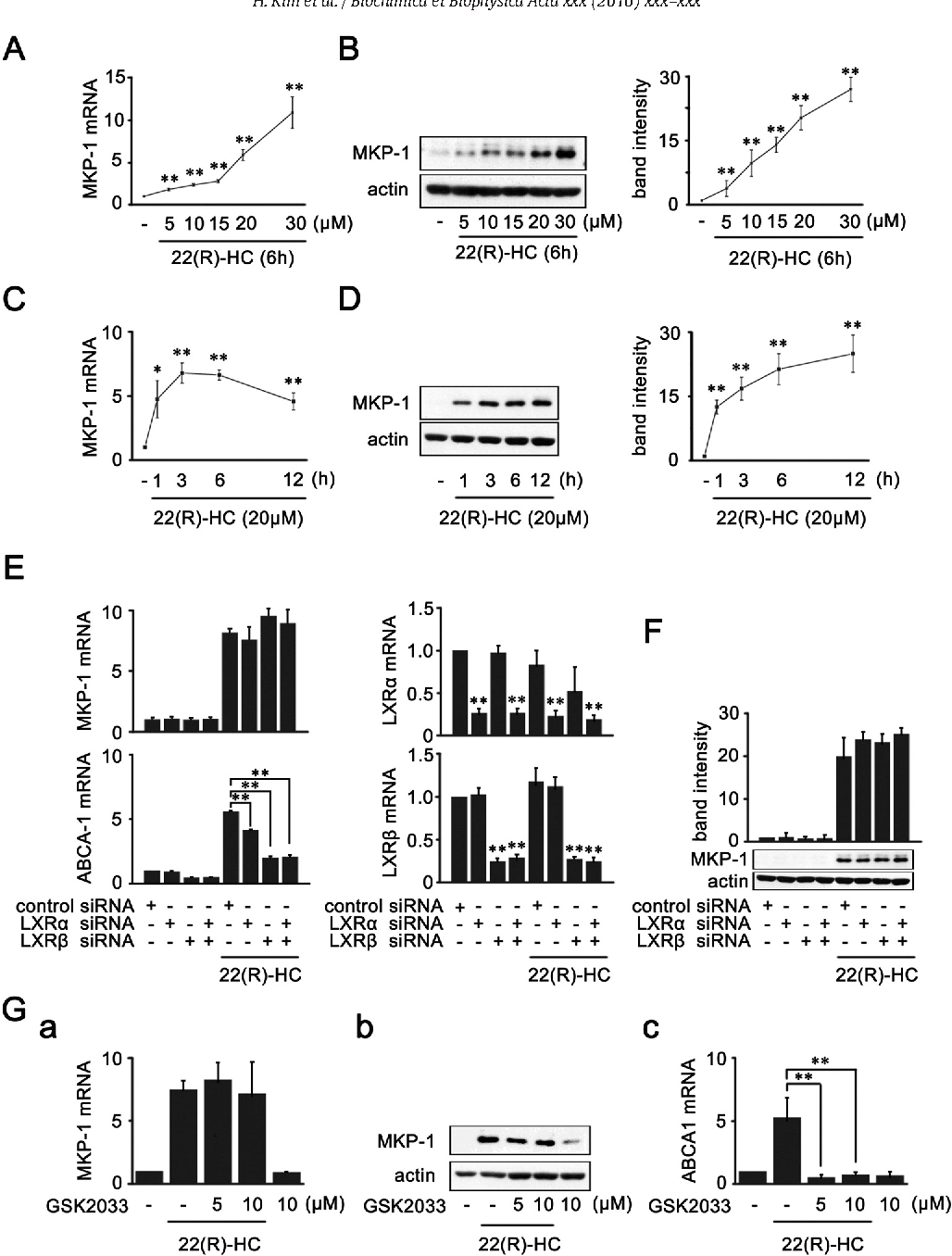 Figure 1 from 22(R)-hydroxycholesterol induces HuR-dependent ... on