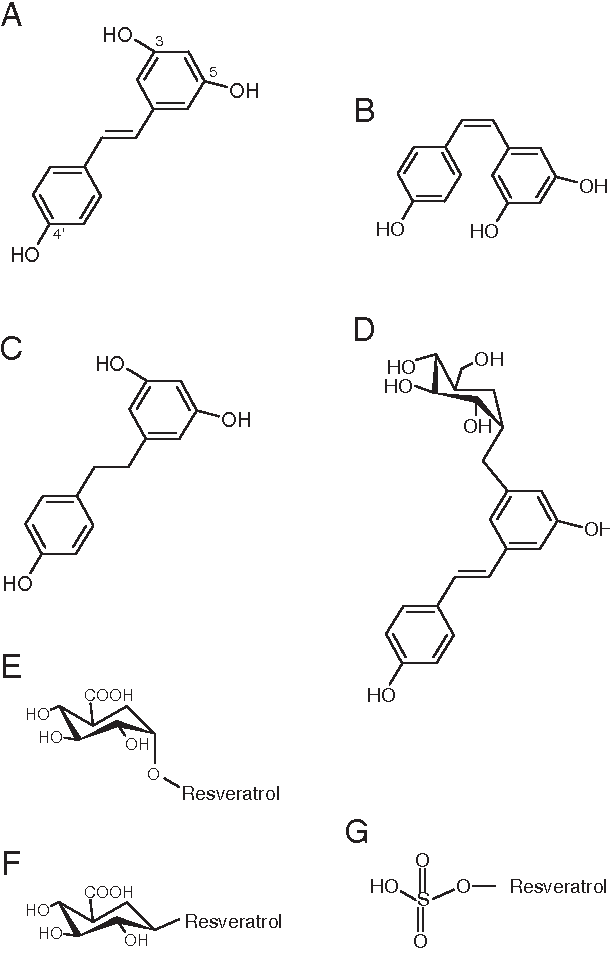 Figure 1 From Resveratrol Bioavailability And Toxicity In Humans