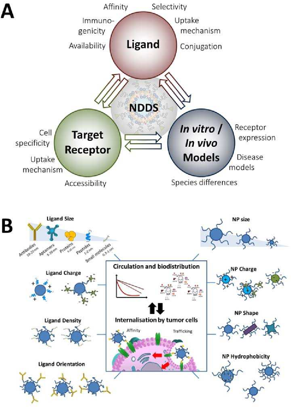 PDF] Hepatocyte-specific drug delivery using active targeted