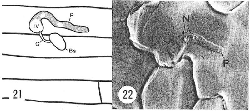 figure 21