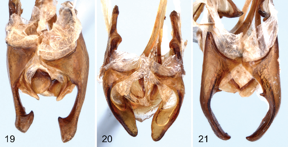 figure 19–21