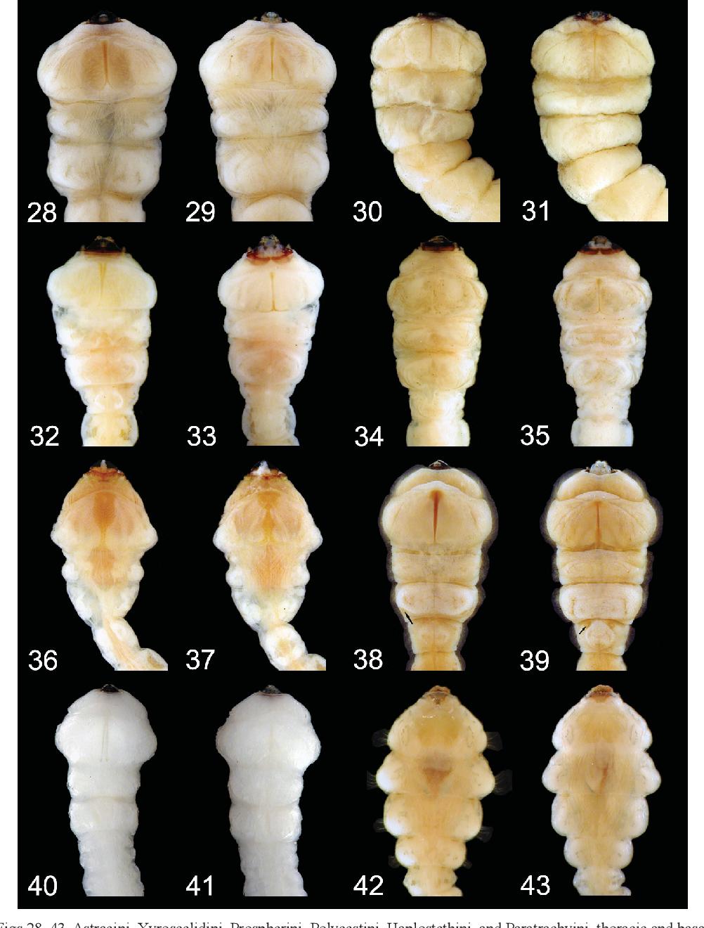 figure 28–43