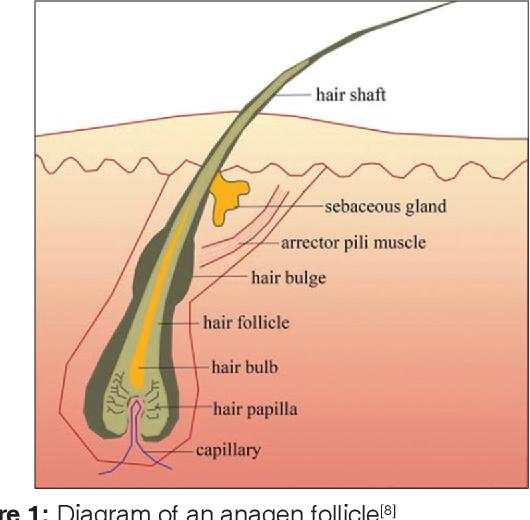 polyherbal anti-dandruff shampoo: basic concept, benefits, and challenges    semantic scholar  semantic scholar