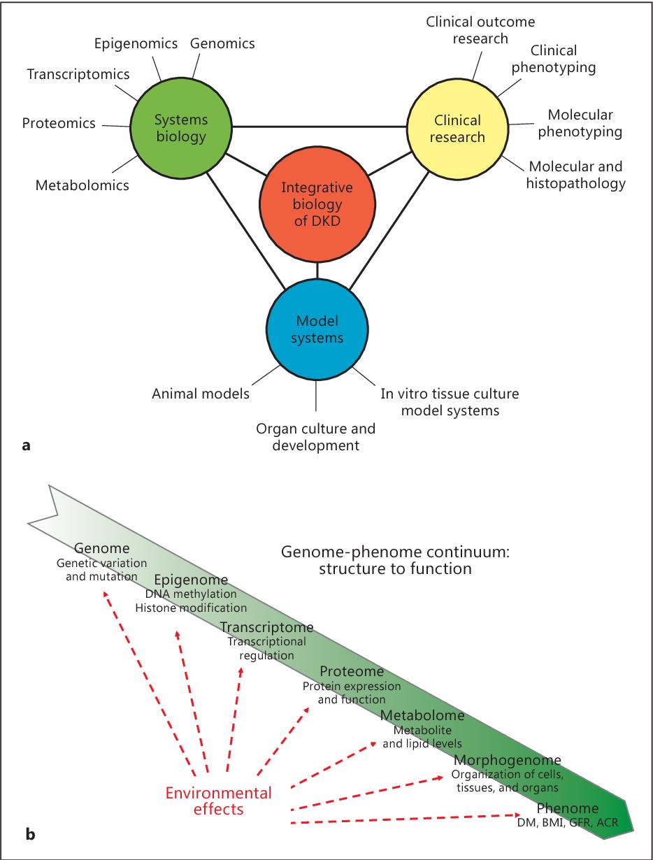 Figure 1 From Integrative Biology Of Diabetic Kidney Disease Semantic Scholar