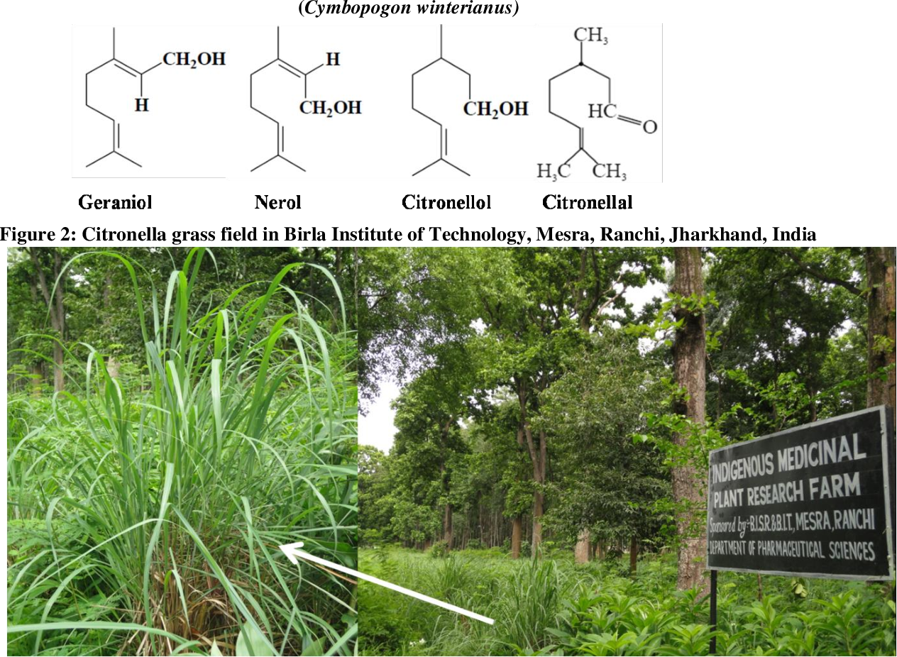 Review Article Chemical Analysis And Therapeutic Uses Of