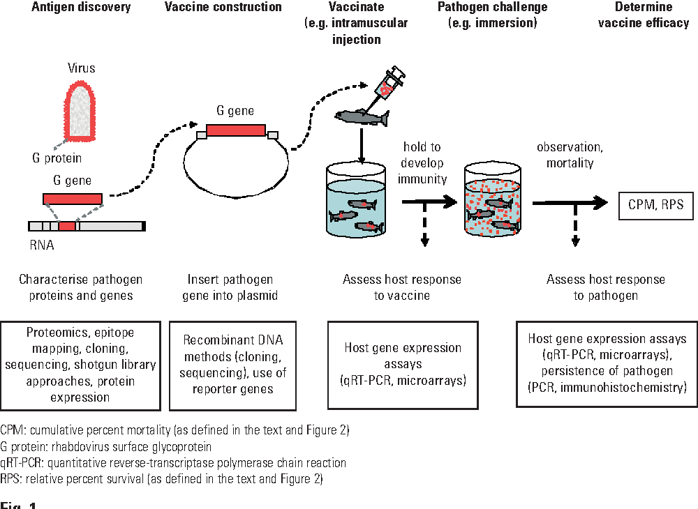 Figure 1 from Biotechnology and DNA vaccines for aquatic