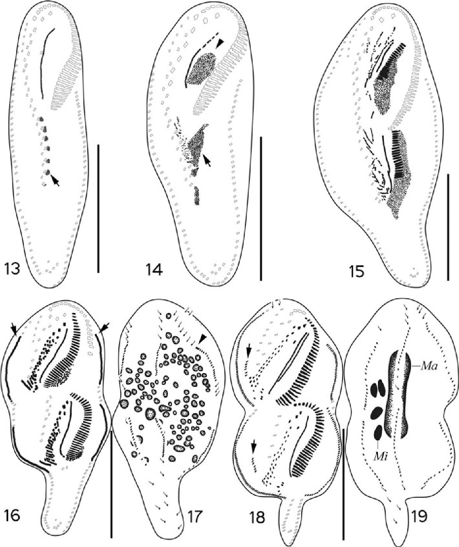 figure 13–19
