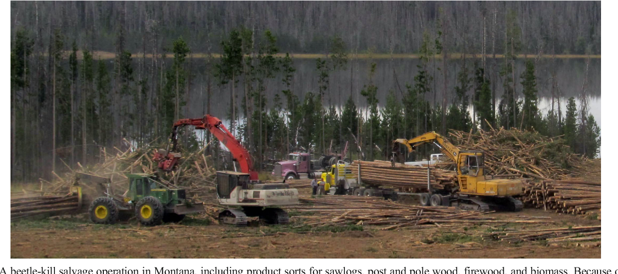Forest Operations and Woody Biomass Logistics to Improve